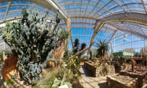 A view of the conservatory at Matthaei Botanical Gardens.