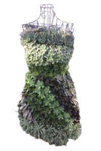 Succulent cocktail dress. Courtesy the University of Michigan Matthaei Botanical Gardens and Nichols Arboretum