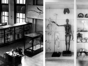 Specimens and objects from the field of natural history, ethnology, geology, medicine and fine art were included in what was then called the 'Museum of the University of Michigan.'