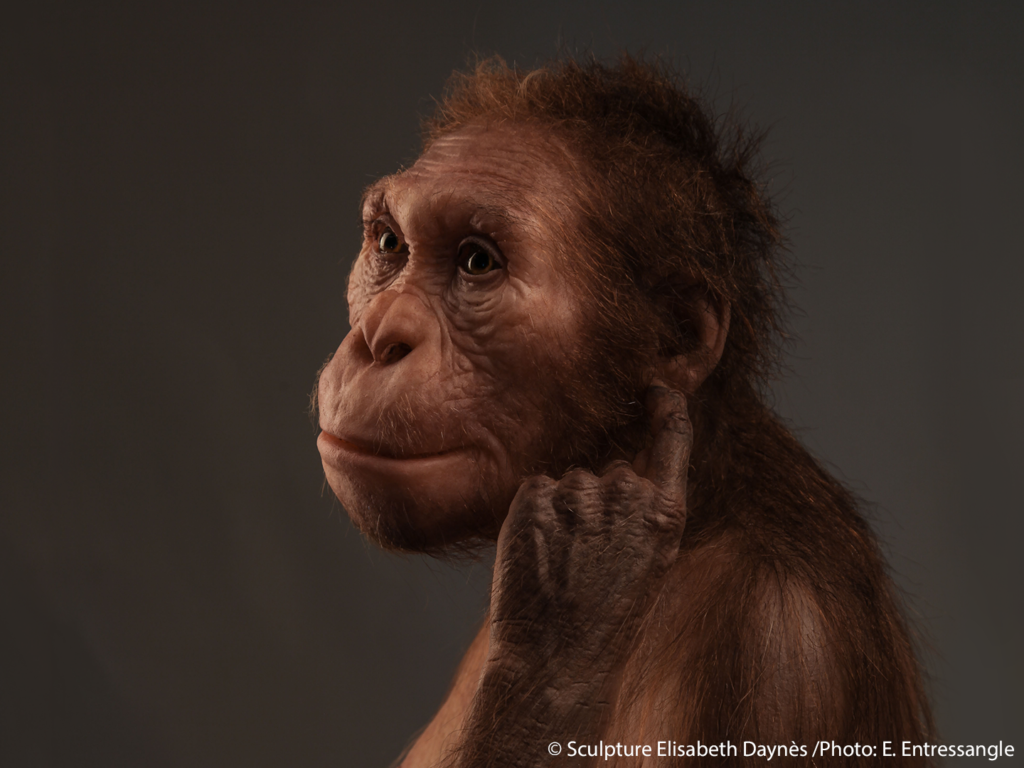 Life-size sculptural reconstruction of Australopithecus sediba, an extinct human relative that roamed southern Africa 2 million years ago. © Sculpture Elisabeth Daynès/Photo: E. Entressangle.