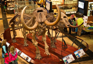 Visitors view the prehistoric exhibits at the U-M Museum of Natural History.