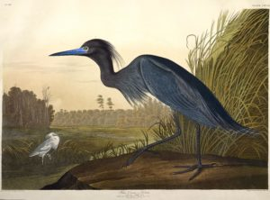 Audubon, John James. The Birds of America: From Original Drawings. London: Pub. by the author, 1827.